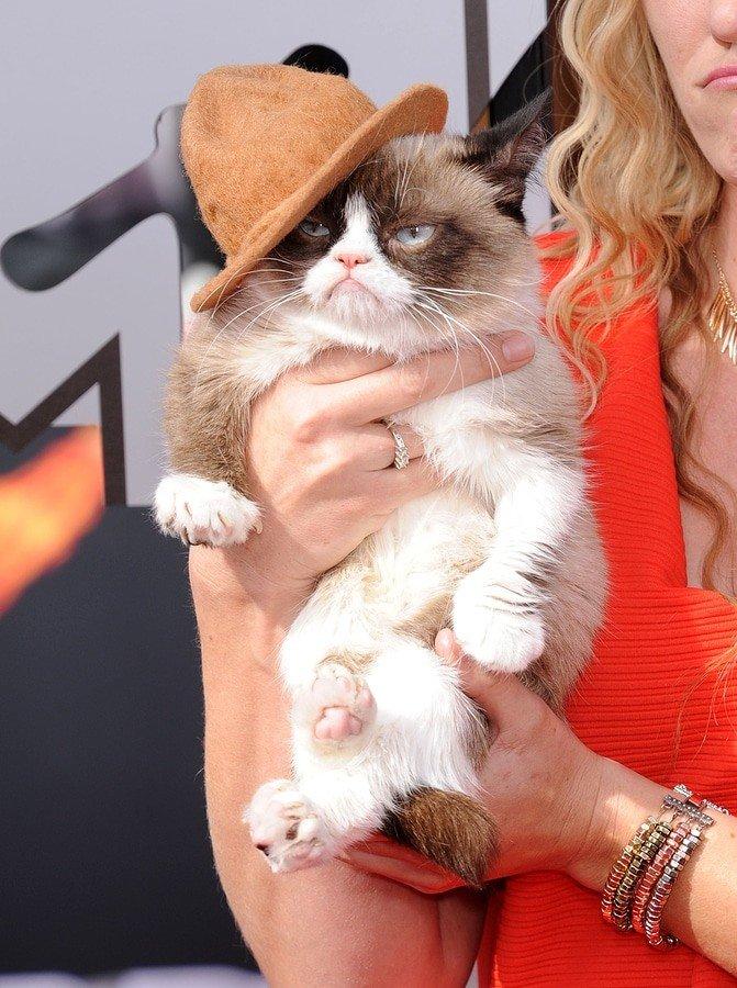 LOS ANGELES - APR 13: Grumpy Cat arrives to the 2014 MTV Movie
