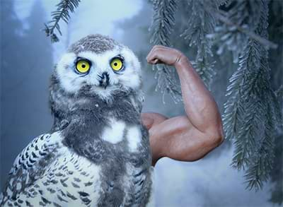 An owl photo edited to include a beefy arm